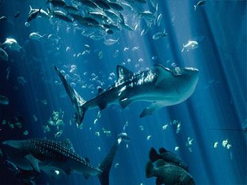 海洋水族馆